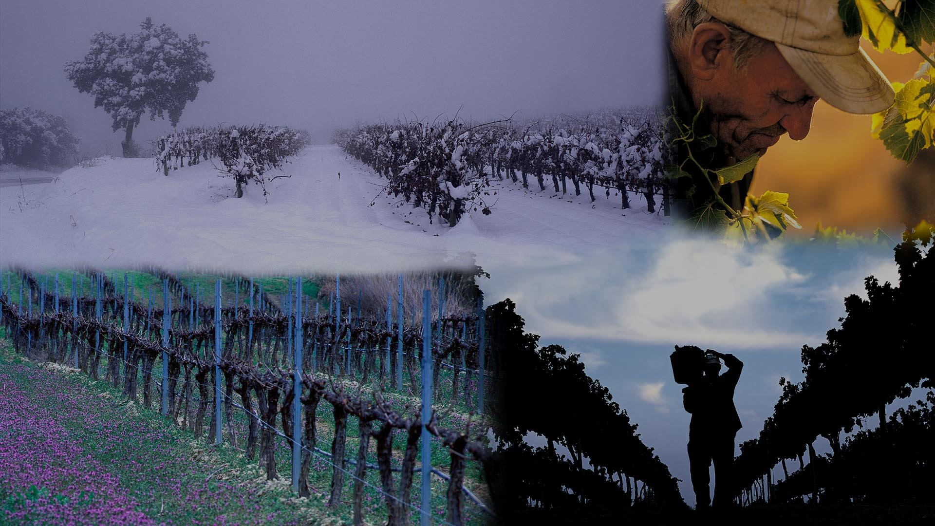 Our vineyards in Somontano